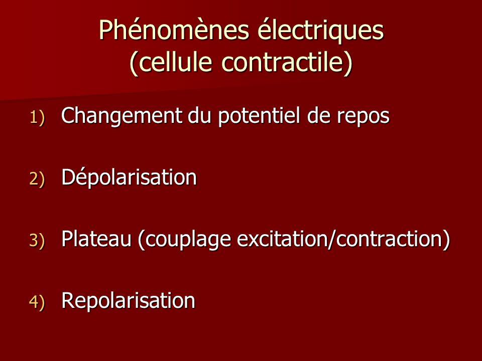Phénomènes électriques (cellule contractile) 1) Changement du potentiel de repos 2) Dépolarisation 3) Plateau (couplage excitation/contraction) 4) Rep