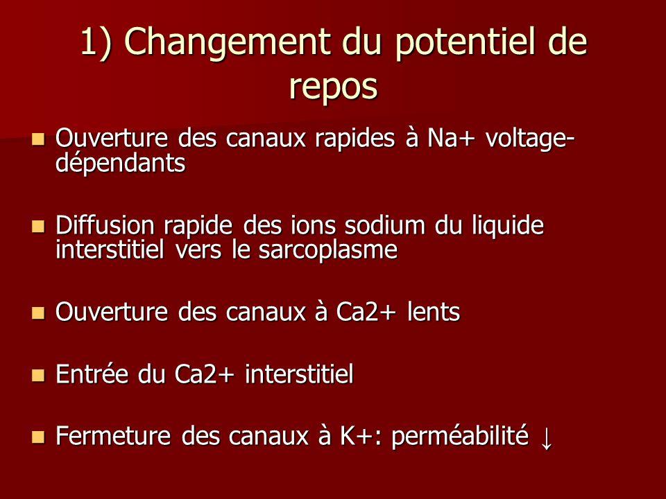 1) Changement du potentiel de repos Ouverture des canaux rapides à Na+ voltage- dépendants Ouverture des canaux rapides à Na+ voltage- dépendants Diff