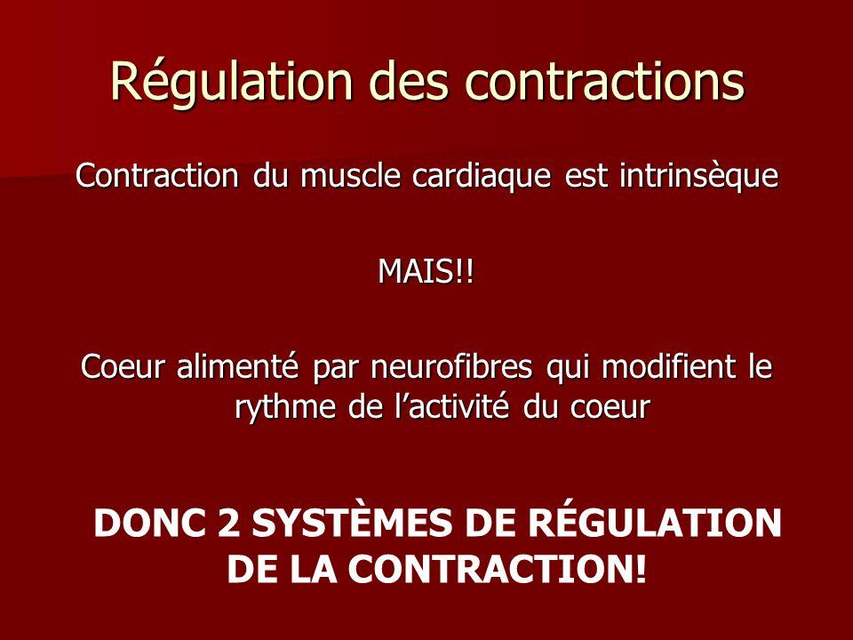 Régulation des contractions Contraction du muscle cardiaque est intrinsèque MAIS!! Coeur alimenté par neurofibres qui modifient le rythme de lactivité