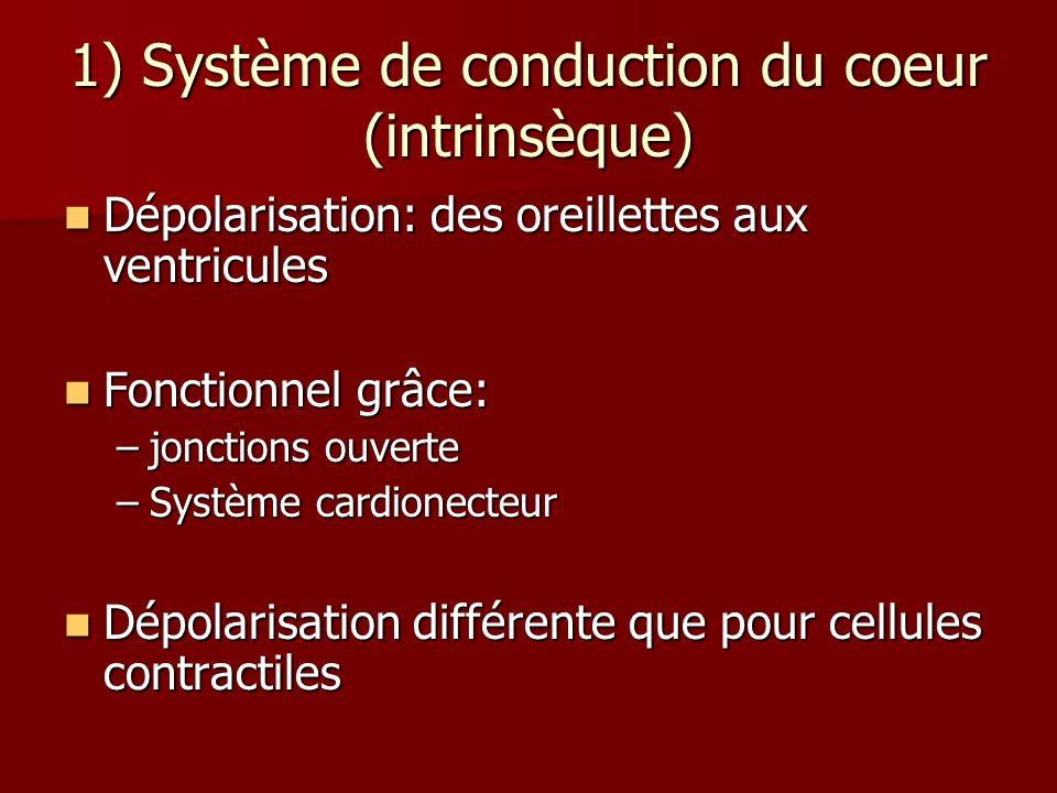 1) Système de conduction du coeur (intrinsèque) Dépolarisation: des oreillettes aux ventricules Dépolarisation: des oreillettes aux ventricules Foncti