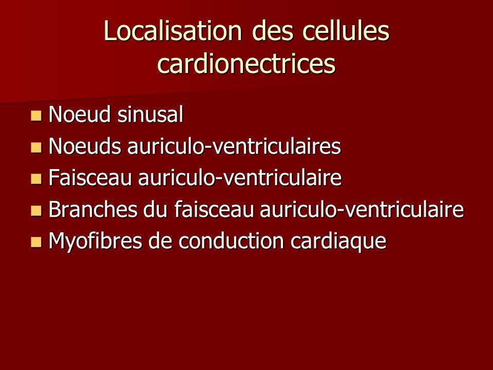 Noeud sinusal Noeud sinusal Noeuds auriculo-ventriculaires Noeuds auriculo-ventriculaires Faisceau auriculo-ventriculaire Faisceau auriculo-ventricula