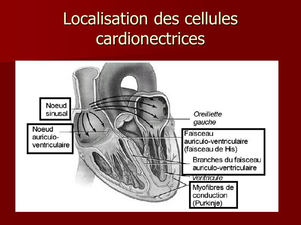 Déroulement de lexcitation (par les cellules cardionectrices)