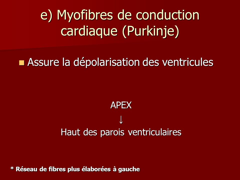 e) Myofibres de conduction cardiaque (Purkinje) APEX Haut des parois ventriculaires Assure la dépolarisation des ventricules Assure la dépolarisation