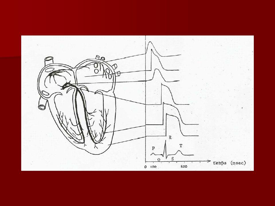 Finalement, le système cardionecteur sert à… Coordonner et synchroniser lactivité cardiaque Coordonner et synchroniser lactivité cardiaque Augmenter la vitesse des battements Augmenter la vitesse des battements
