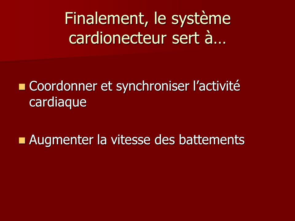 Finalement, le système cardionecteur sert à… Coordonner et synchroniser lactivité cardiaque Coordonner et synchroniser lactivité cardiaque Augmenter l