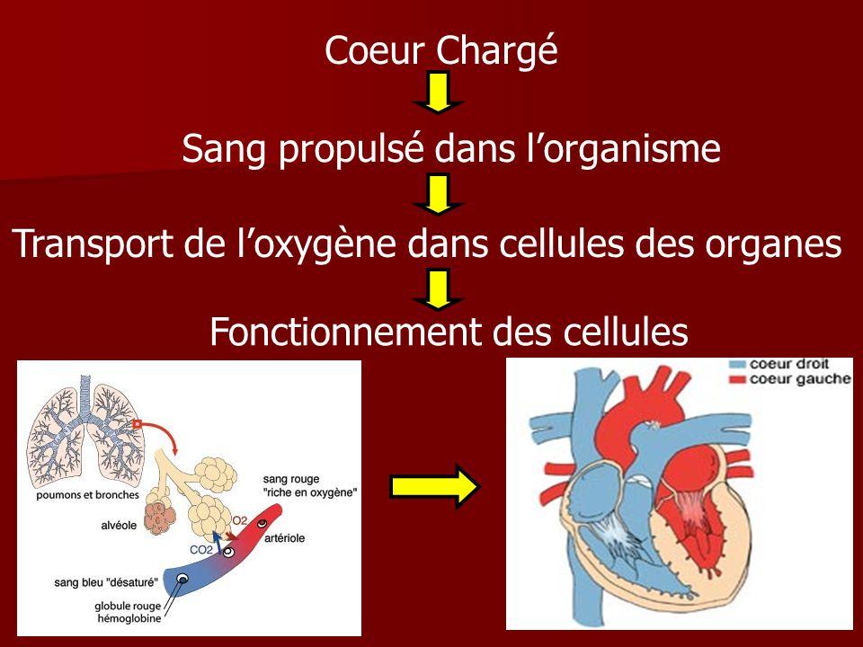 Coeur Chargé Sang propulsé dans lorganisme Transport de loxygène dans cellules des organes Fonctionnement des cellules