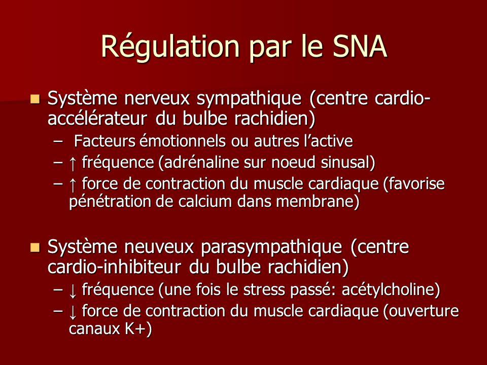 Régulation par le SNA Système nerveux sympathique (centre cardio- accélérateur du bulbe rachidien) Système nerveux sympathique (centre cardio- accélér