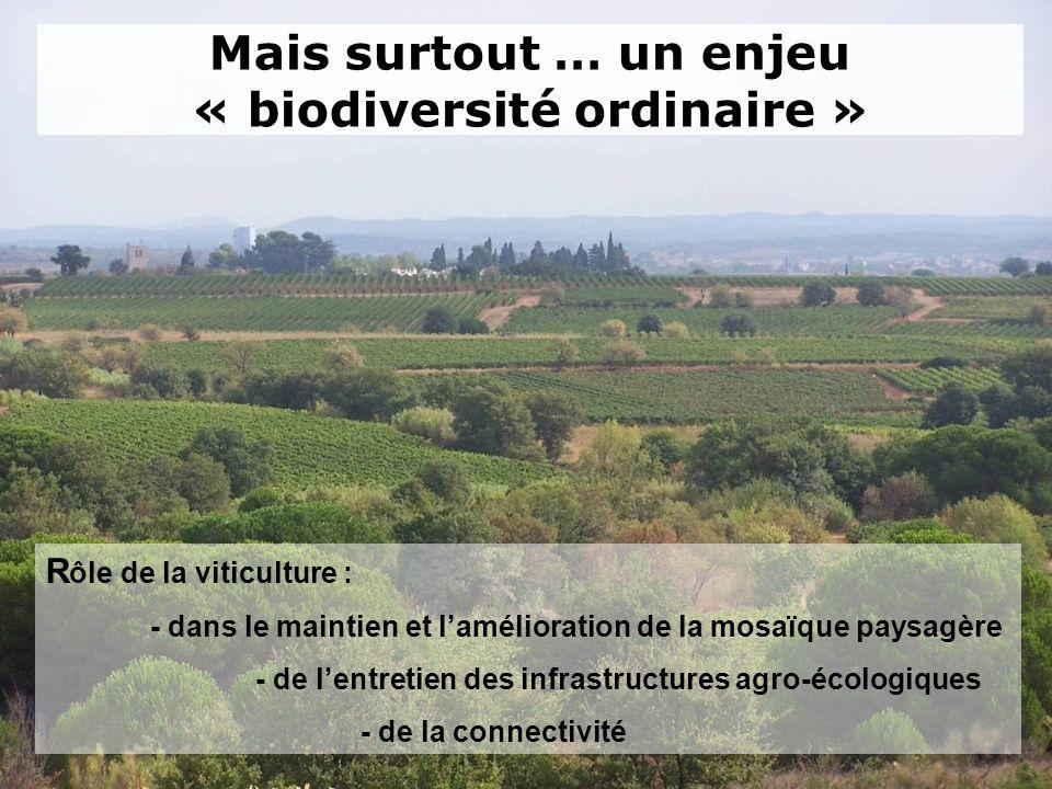 Mais surtout … un enjeu « biodiversité ordinaire » R ôle de la viticulture : - dans le maintien et lamélioration de la mosaïque paysagère - de lentret