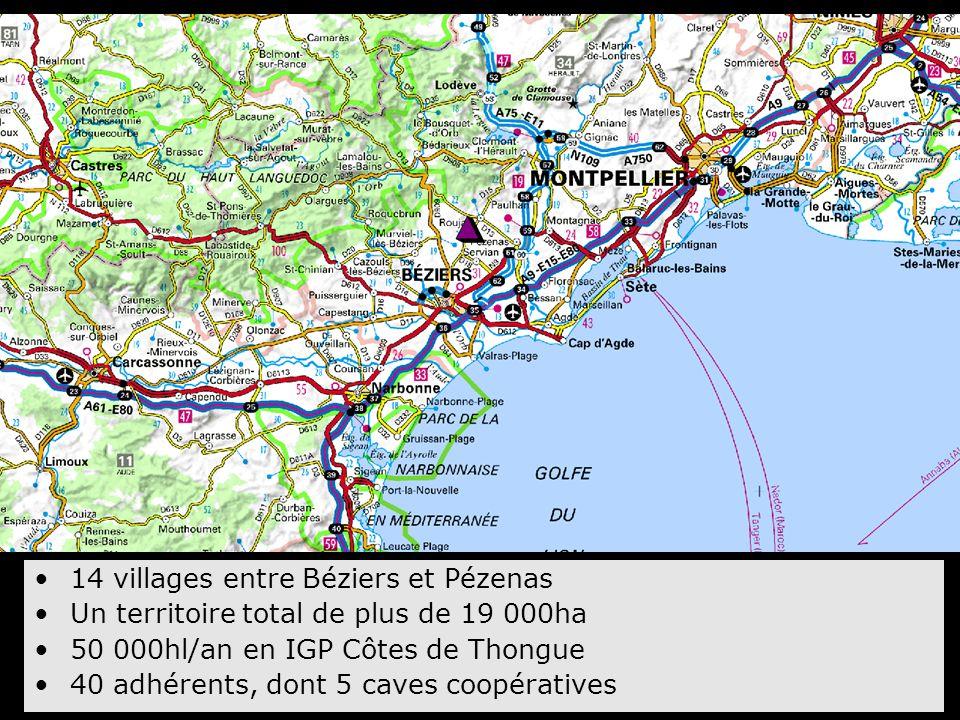 14 villages entre Béziers et Pézenas Un territoire total de plus de 19 000ha 50 000hl/an en IGP Côtes de Thongue 40 adhérents, dont 5 caves coopérativ