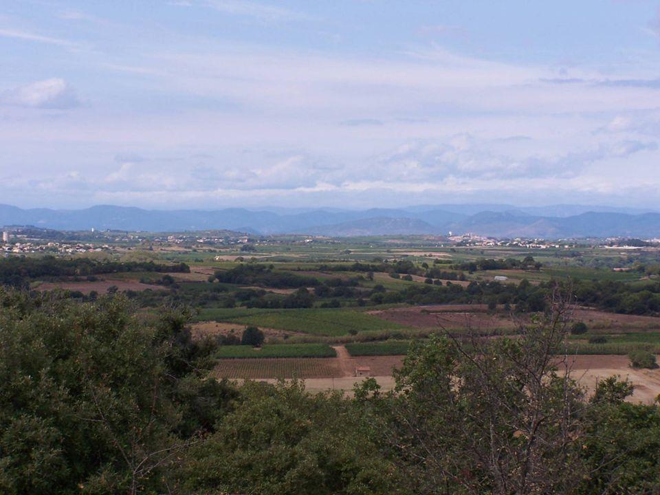 Mais surtout … un enjeu « biodiversité ordinaire » R ôle de la viticulture : - dans le maintien et lamélioration de la mosaïque paysagère - de lentretien des infrastructures agro-écologiques - de la connectivité