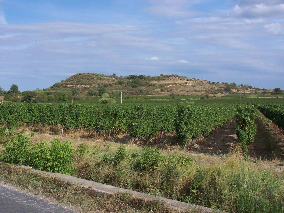Participation des vignerons à « lObservatoire de la biodiversité sur les espaces agricoles » du MNHN Enquêtes participatives