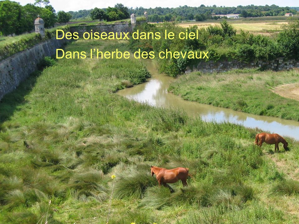Poème de Claude Marcel Breault Des oiseaux dans le ciel Dans lherbe des chevaux