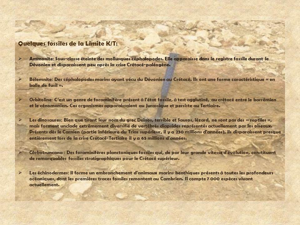 Quelques fossiles de la Limite K/T: Ammonite: Sous-classe éteinte des mollusques céphalopodes. Elle apparaisse dans le registre fossile durant le Dévo