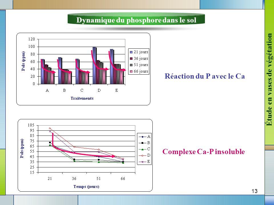 13 Dynamique du phosphore dans le sol Réaction du P avec le Ca Complexe Ca-P insoluble Étude en vases de végétation