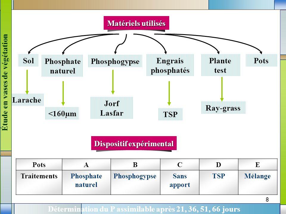 8 PotsABCDE TraitementsPhosphate naturel PhosphogypseSans apport TSPMélange Sol Phosphate naturel Phosphogypse Plante test Engrais phosphatés Pots Lar