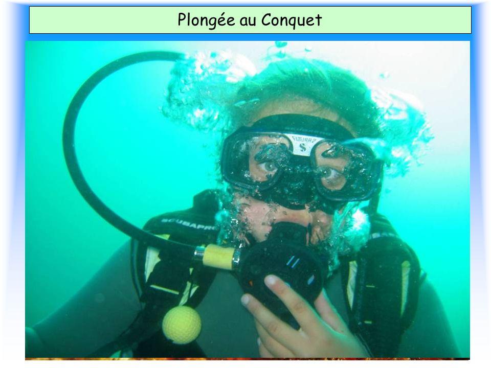 Plongée au Conquet