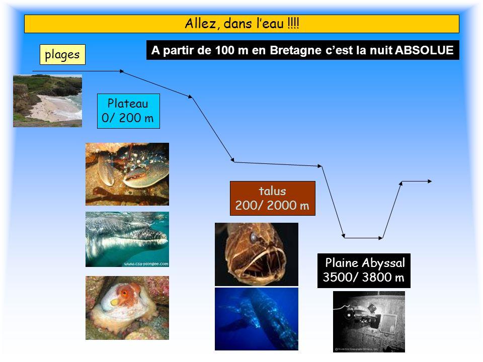 Allez, dans leau !!!! plages Plateau 0/ 200 m talus 200/ 2000 m Plaine Abyssal 3500/ 3800 m A partir de 100 m en Bretagne cest la nuit ABSOLUE