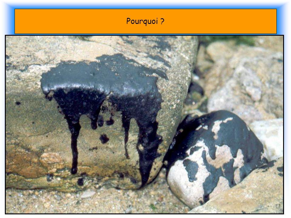 Pourquoi ? Les Marées noires En 10 ans dans le monde 77 pétroliers ont coulés 90 % de la pollution est due au Dégazage Les bateaux sont trop vieux, ma