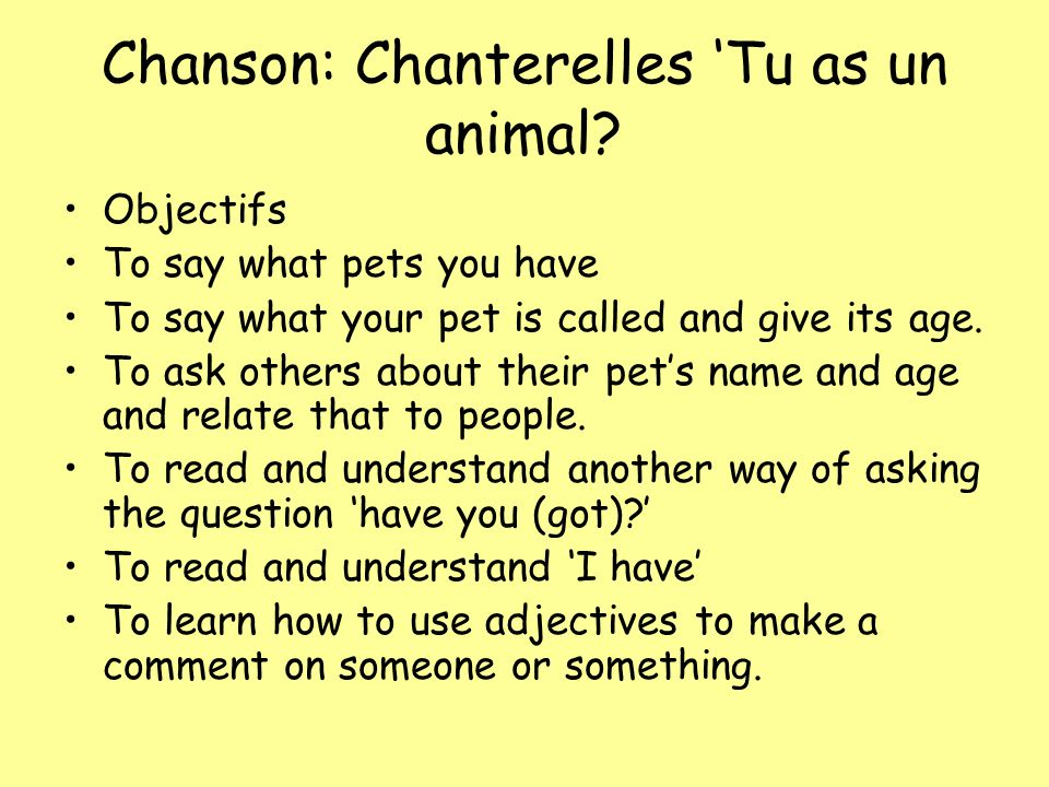 Chanson: Chanterelles Tu as un animal? Objectifs To say what pets you have To say what your pet is called and give its age. To ask others about their