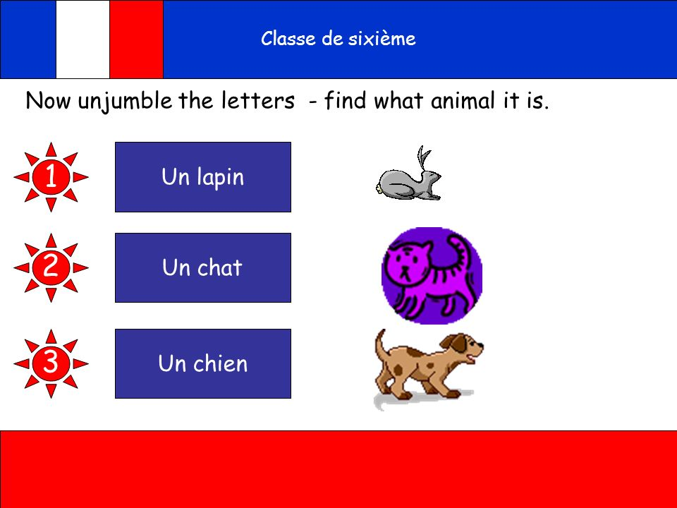 A toi Classe de sixième Now unjumble the letters - find what animal it is. punlain 1 thunca cheunin 2 3
