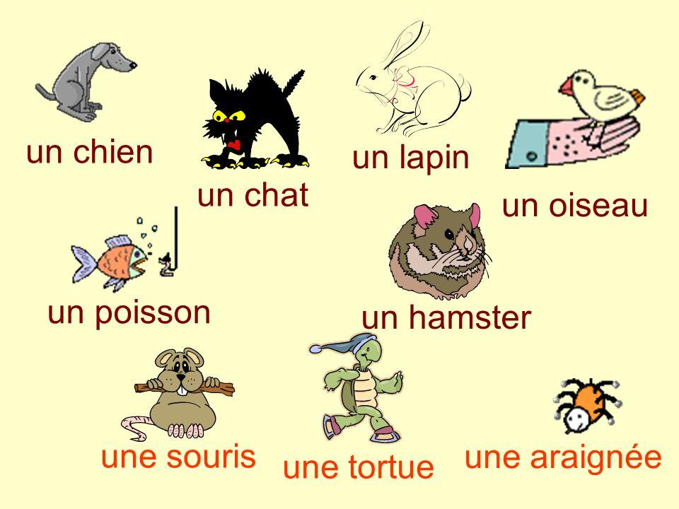 un chien un chat un hamster un lapin un poisson un oiseau une souris une araignée une tortue