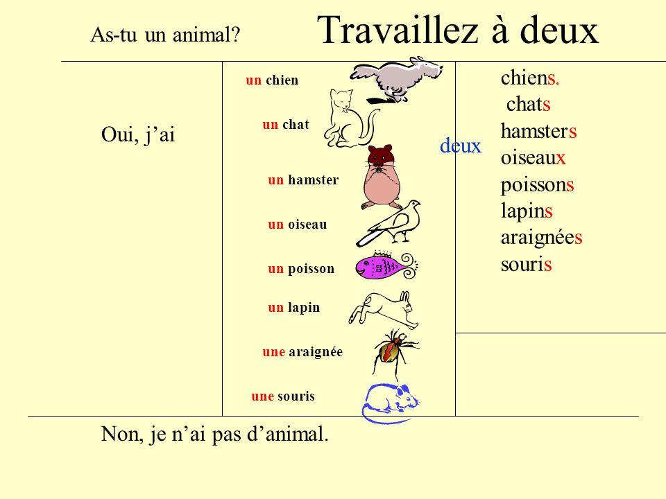 un chien un chat un hamster un lapin un poisson une araignée une souris un oiseau Oui, jai As-tu un animal.