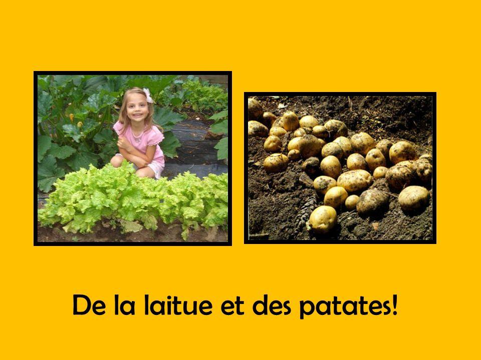 De la laitue et des patates!