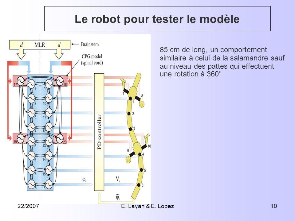 22/2007E. Layan & E. Lopez10 Le robot pour tester le modèle 85 cm de long, un comportement similaire à celui de la salamandre sauf au niveau des patte