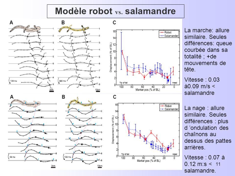 22/2007E. Layan & E. Lopez11 Modèle robot vs. salamandre La marche: allure similaire.