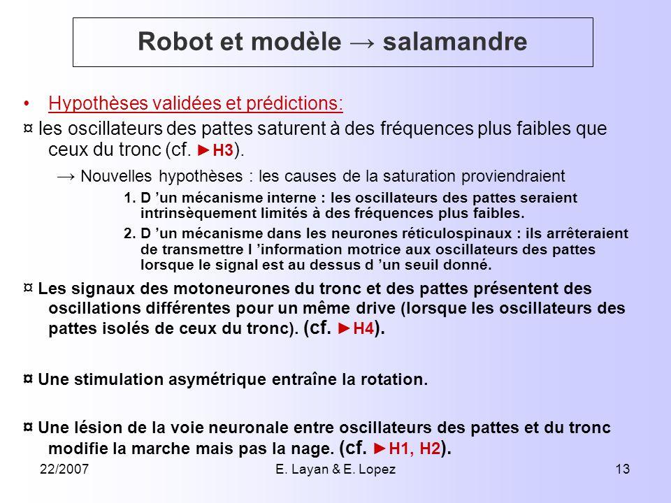 22/2007E. Layan & E. Lopez13 Robot et modèle salamandre Hypothèses validées et prédictions: ¤ les oscillateurs des pattes saturent à des fréquences pl