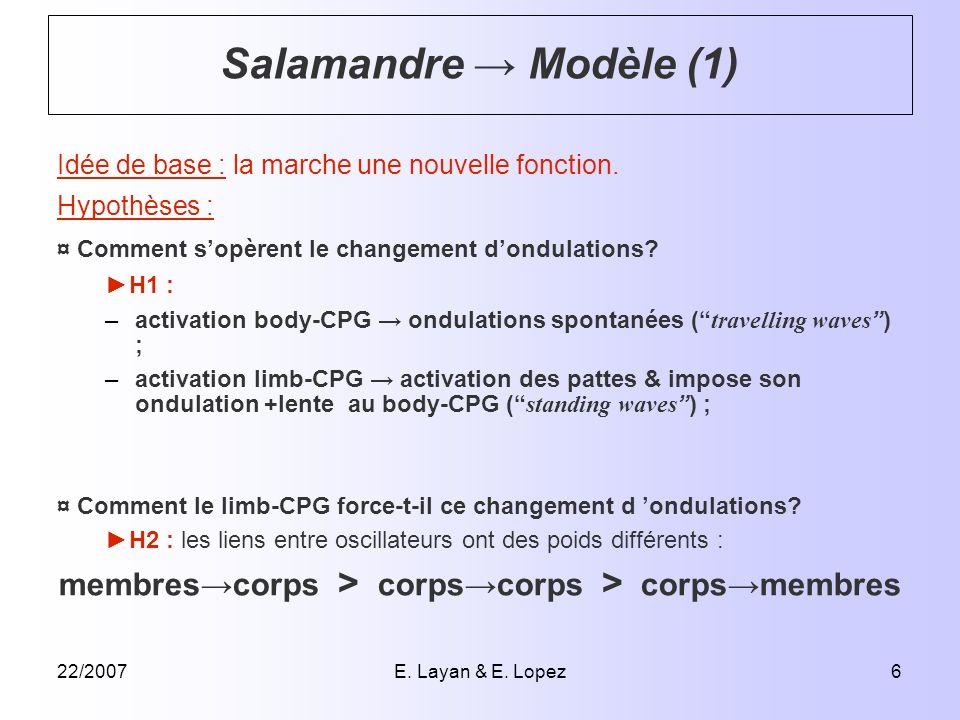 22/2007E. Layan & E. Lopez6 Idée de base : la marche une nouvelle fonction. Hypothèses : ¤ Comment sopèrent le changement dondulations? H1 : –activati