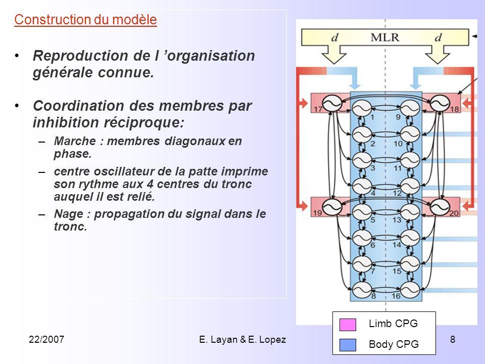 22/2007E. Layan & E. Lopez8 Construction du modèle Reproduction de l organisation générale connue. Coordination des membres par inhibition réciproque: