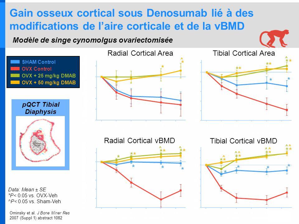 Gain osseux cortical sous Denosumab lié à des modifications de laire corticale et de la vBMD Modèle de singe cynomolgus ovariectomisée Data: Mean ± SE