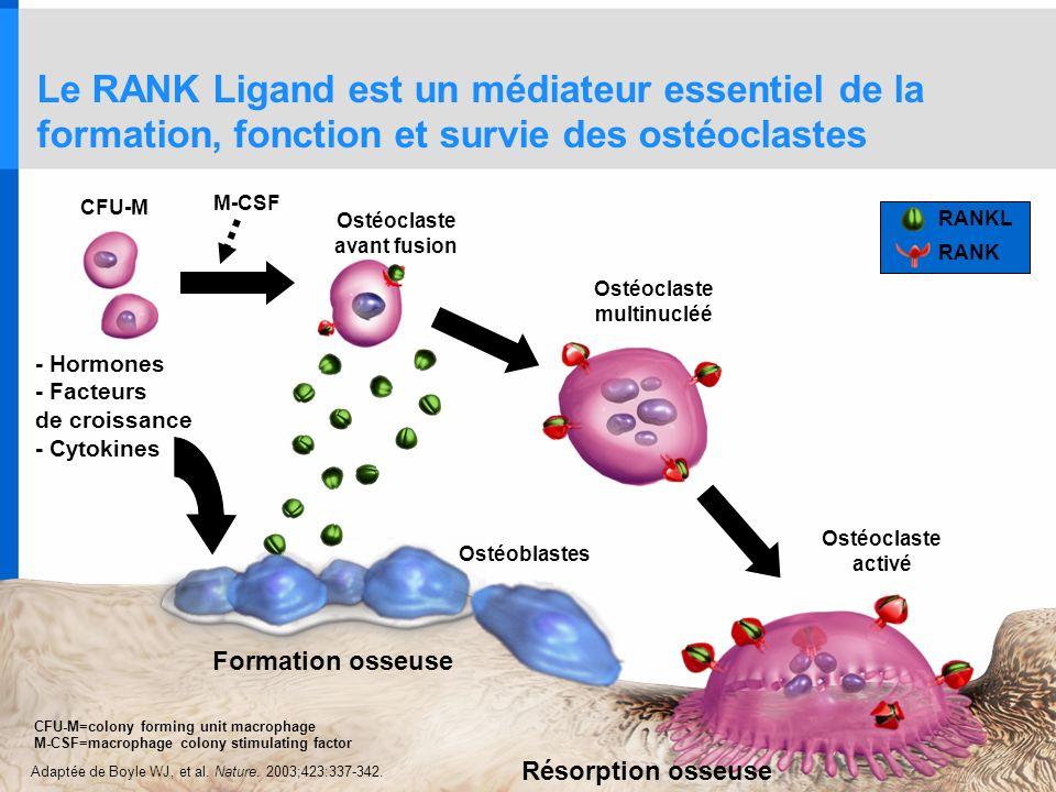 Le RANK Ligand est un médiateur essentiel de la formation, fonction et survie des ostéoclastes Ostéoblastes Ostéoclaste activé CFU-M Ostéoclaste multi