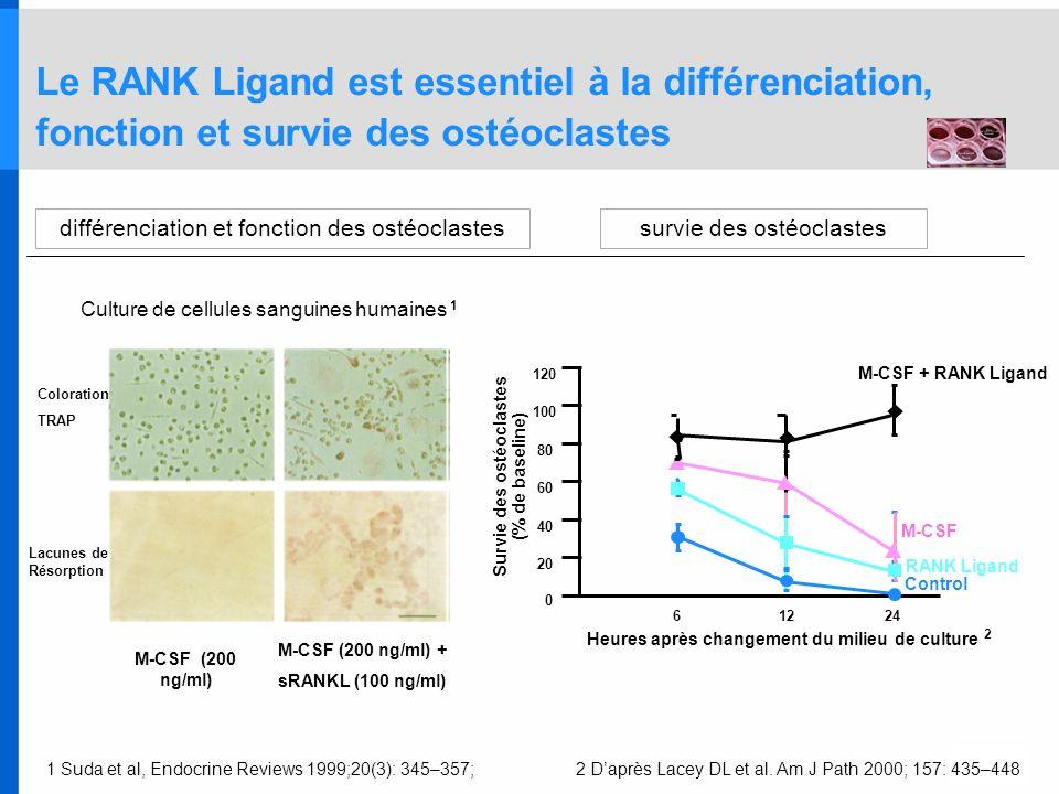 1 Suda et al, Endocrine Reviews 1999;20(3): 345–357;2 Daprès Lacey DL et al. Am J Path 2000; 157: 435–448 Le RANK Ligand est essentiel à la différenci