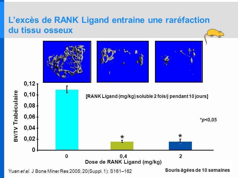Yuan et al. J Bone Miner Res 2005; 20(Suppl. 1): S161–162 Lexcès de RANK Ligand entraine une raréfaction du tissu osseux 0 0,02 0,04 0,06 0,08 0,10 0,