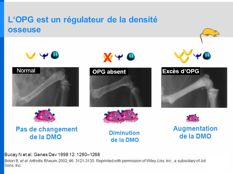 LOPG est un régulateur de la densité osseuse Bucay N et al. Genes Dev 1998 12: 1260–1268 Bolon B, et al. Arthritis Rheum. 2002; 46: 3121-3135. Reprint
