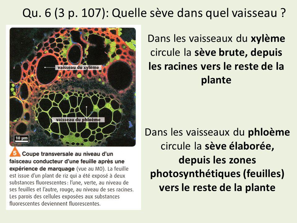 Qu. 6 (3 p. 107): Quelle sève dans quel vaisseau ? Dans les vaisseaux du xylème circule la sève brute, depuis les racines vers le reste de la plante 1