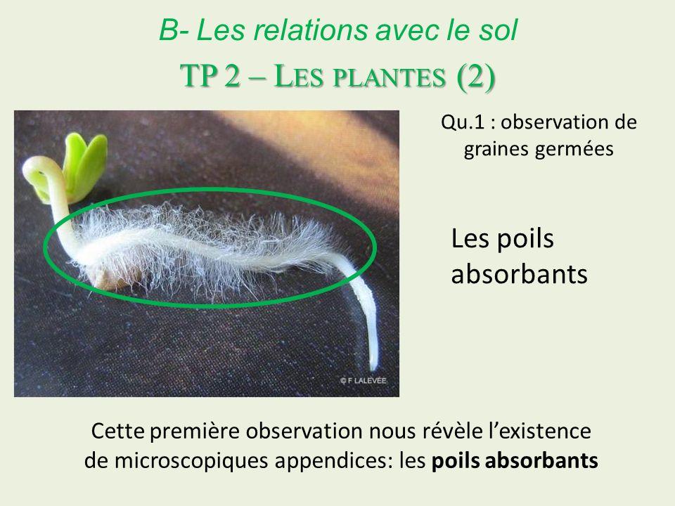 B- Les relations avec le sol Cette première observation nous révèle lexistence de microscopiques appendices: les poils absorbants TP 2 – L ES PLANTES