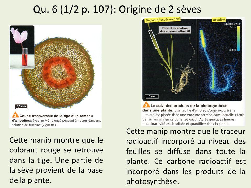 Qu. 6 (1/2 p. 107): Origine de 2 sèves Cette manip montre que le colorant rouge se retrouve dans la tige. Une partie de la sève provient de la base de