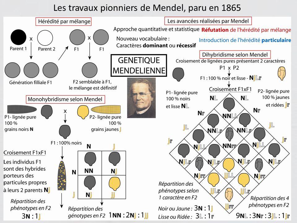 Lessor de la génétique aura lieu plus tard, après 1900, grâce aux progrès accomplis alors (microscopie, découverte des chromosomes, descriptions de la mitose et de la méiose) Cest à cette époque que le laboratoire de T.H.