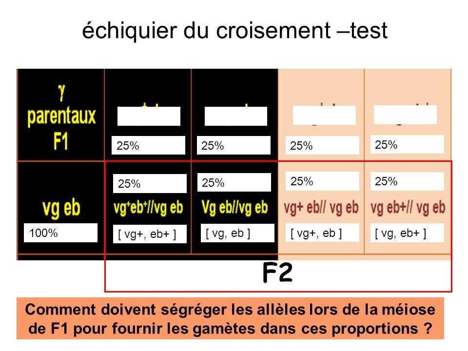 échiquier du croisement –test [ vg+, eb+ ] [ vg, eb ] [ vg+, eb ] [ vg, eb+ ] 25% 100% 25% F2 Comment doivent ségréger les allèles lors de la méiose d