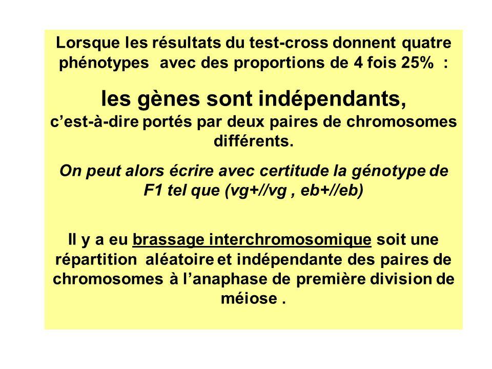 Lorsque les résultats du test-cross donnent quatre phénotypes avec des proportions de 4 fois 25% : les gènes sont indépendants, cest-à-dire portés par