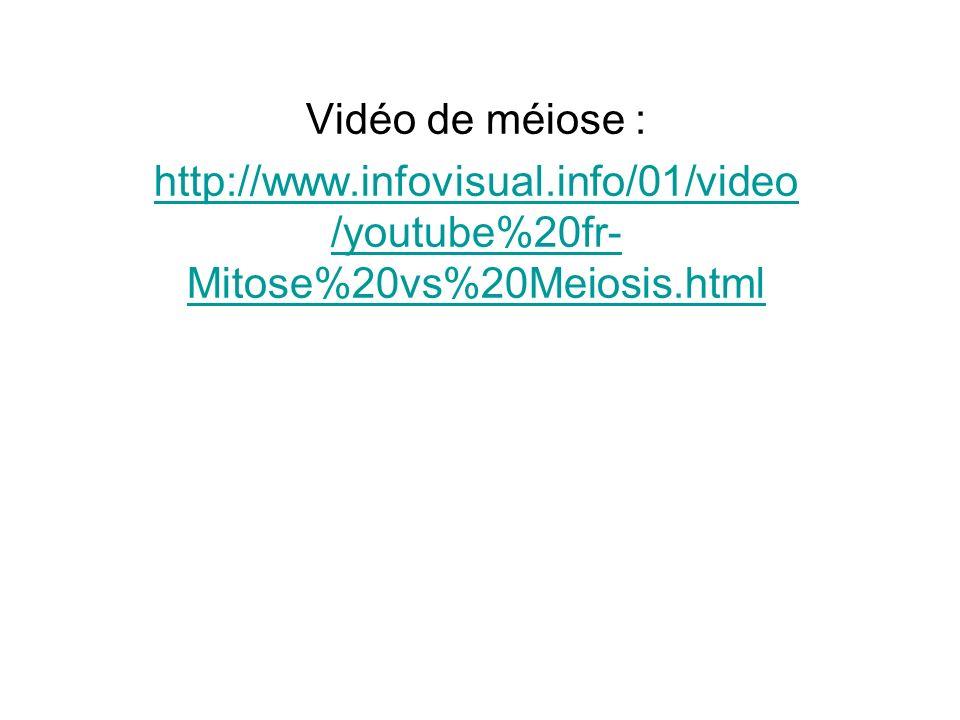 Vidéo de méiose : http://www.infovisual.info/01/video /youtube%20fr- Mitose%20vs%20Meiosis.html