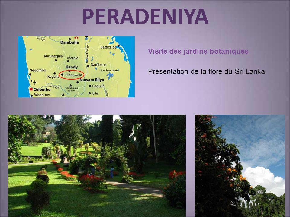 PERADENIYA Visite des jardins botaniques Présentation de la flore du Sri Lanka
