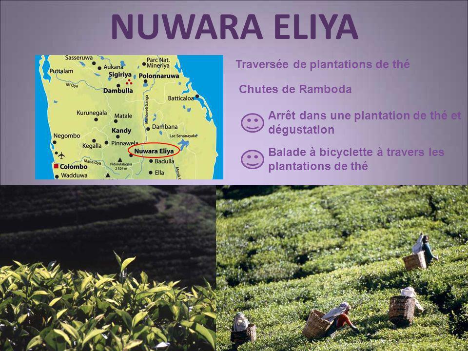 NUWARA ELIYA Traversée de plantations de thé Chutes de Ramboda Arrêt dans une plantation de thé et dégustation Balade à bicyclette à travers les plant
