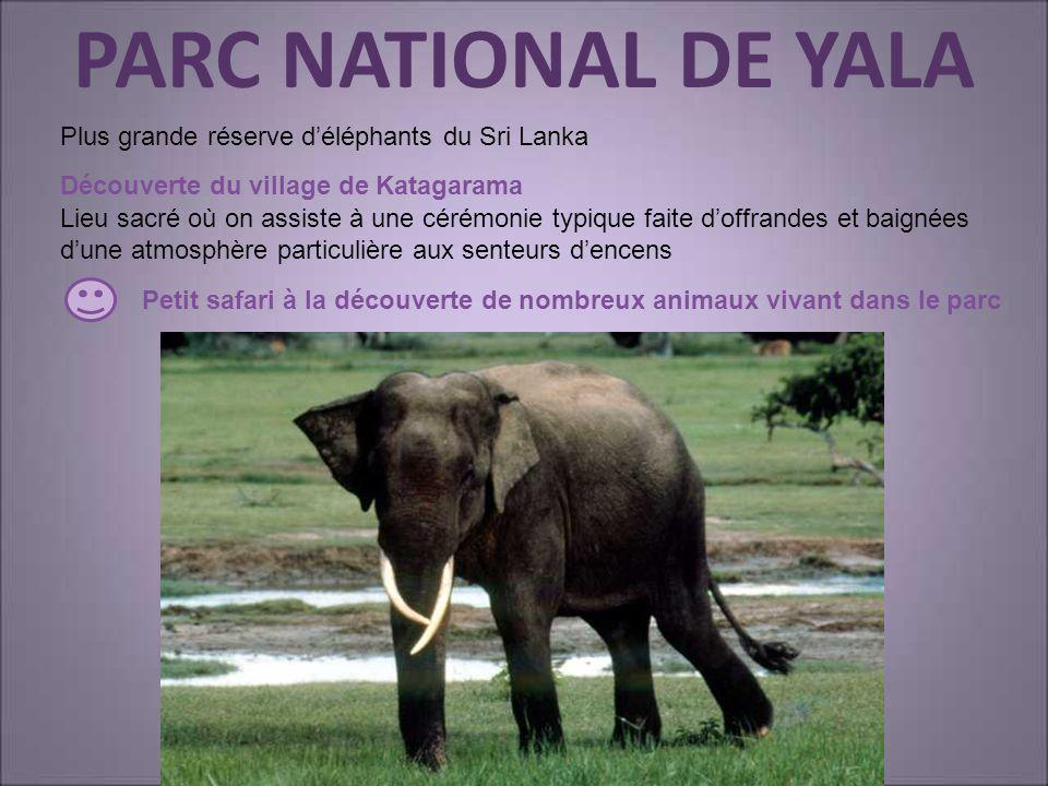 PARC NATIONAL DE YALA Découverte du village de Katagarama Petit safari à la découverte de nombreux animaux vivant dans le parc Plus grande réserve dél