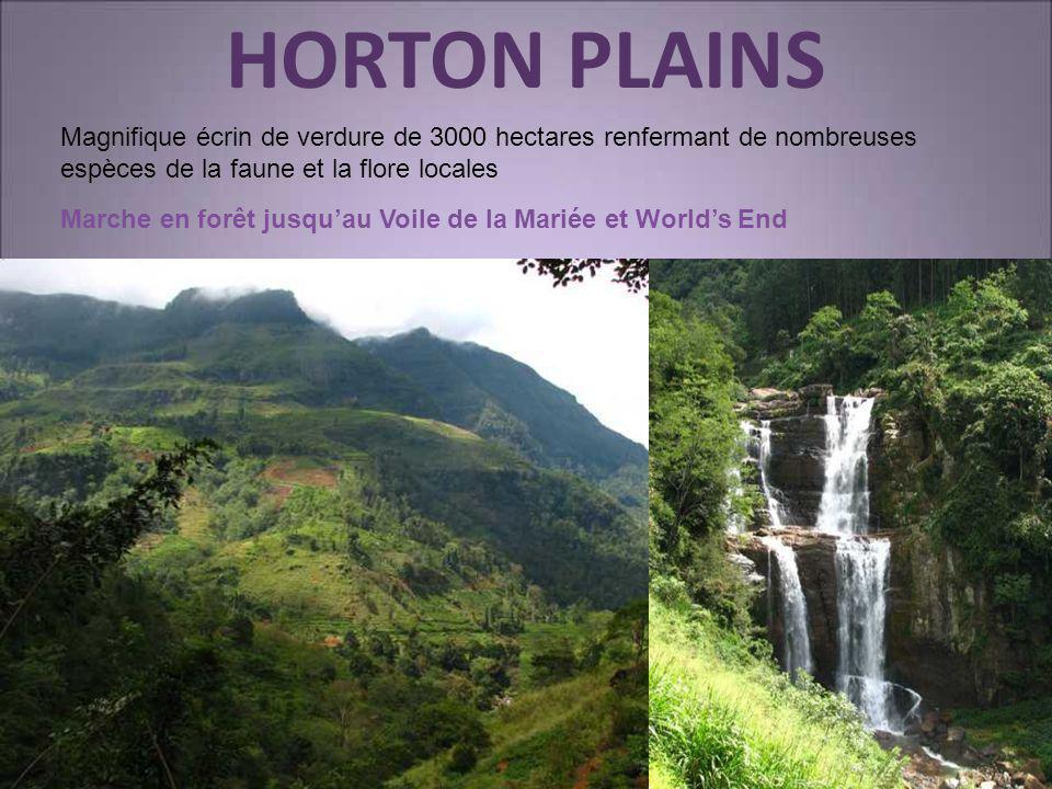 HORTON PLAINS Magnifique écrin de verdure de 3000 hectares renfermant de nombreuses espèces de la faune et la flore locales Marche en forêt jusquau Vo