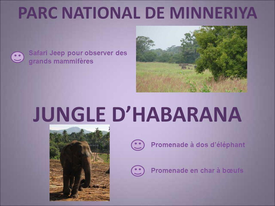 PARC NATIONAL DE MINNERIYA Safari Jeep pour observer des grands mammifères JUNGLE DHABARANA Promenade à dos déléphant Promenade en char à bœufs