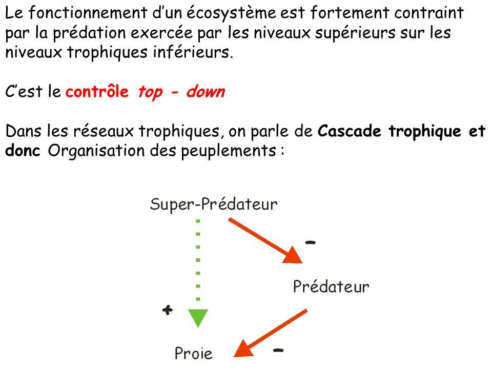 Le fonctionnement dun écosystème est fortement contraint par la prédation exercée par les niveaux supérieurs sur les niveaux trophiques inférieurs.